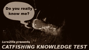 catfishing knowledge test
